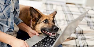 Schäferhund sitzt mit Herrchen vor dem Laptop