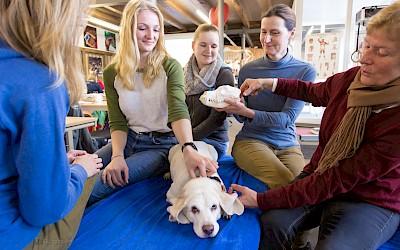 Praxisunterricht in der Hundephysiotherapie