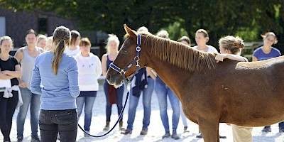 Demonstration am Pferd vor den KursteilnehmerInnen