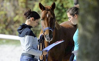 Teilnehmerinnen beraten sich mit Hilfe ihrer Unterlagen am Pferd