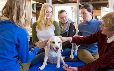 Teilnehmerinnen und Dozentinnen üben am Hund