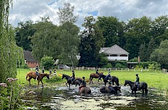 Die Reitanlage Tiergarten in Lüneburg