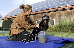 Behandlung eines Hundes mit der Matrixtherapie