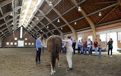 Teilnehmer schauen einer Präsentation am Pferd in der Reithalle zu