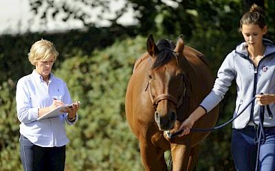Ganganalyse am Pferd