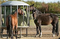 Pferde in der Pferdepension an der Futterstelle