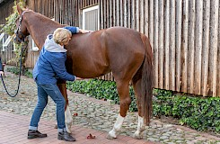 Die Pferdeosteotherapeutin tastet den Körper des Pferdes ab