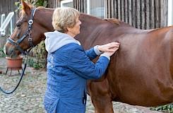 Die Pferdeosteopathin behandelt das Pferd