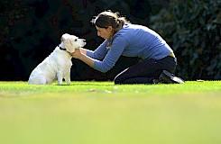Die Hundeosteotherapeutin erfühlt Blockaden im Halswirbelbereich des Hundes