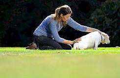 Die Hundeosteotherapeutin löst eine Blockade beim Hund.
