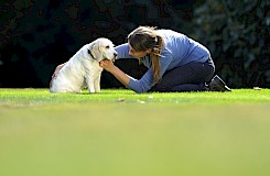Die Osteopathie am Hund erfordert viel Feingefühl der Therapeutin
