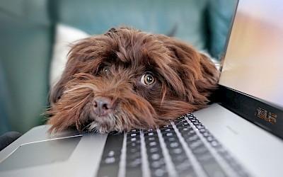 Ein kleiner Hund legt seinen Kopf auf ein Laptop