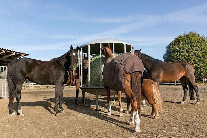 Pferde im Außenbereich an der Heuraufe