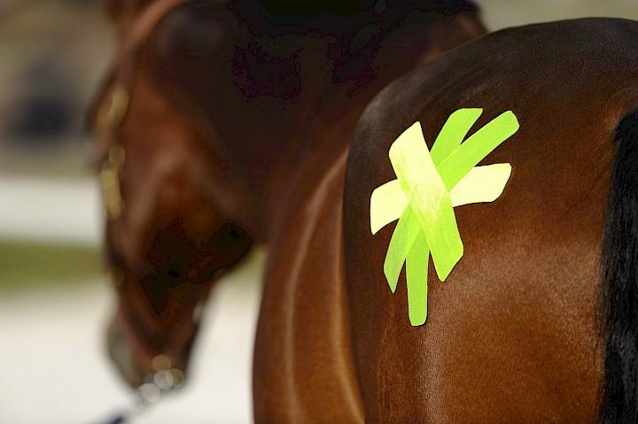 Anwendung von Tapes zur Behandlung von Pferden
