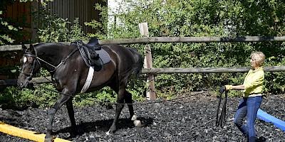 Fotomontage Sigrid Weppelmann beim Longieren eines Pferdes