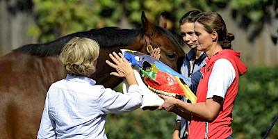 Die Kranio-Sakrale-Therapie beschäftigt sich mit dem Schädel des Pferdes, der hier gezeigt wird