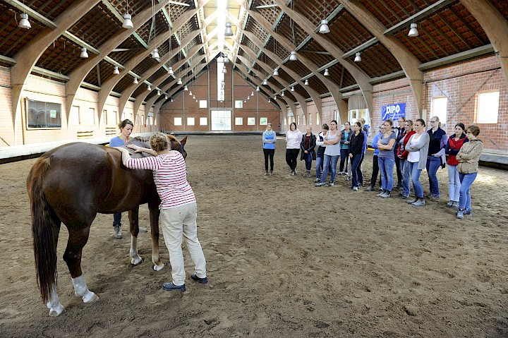 Im Kurs werden Patientenpferde vorgestellt und anschließend von den TeilnehmerInnen behandelt