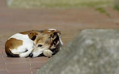 Ein Hund sonnt sich auf dem Hof