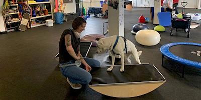 Kursraum in dem eine Hundebesitzerin mit ihrem Hund an Geräten trainiert