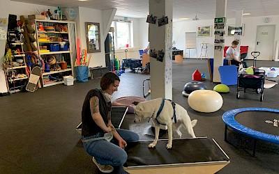 Ein Hund trainiert auf einem Balancebrett