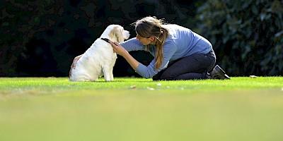 Eine Therapeutin untersucht einen Hund