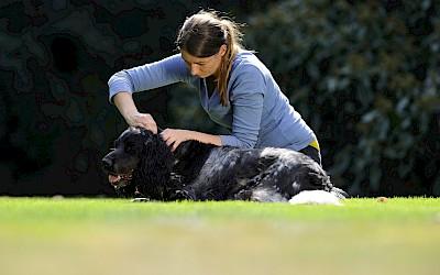 Eine Therapeutin behandelt eine großen Hund an der Halswirbelsäule
