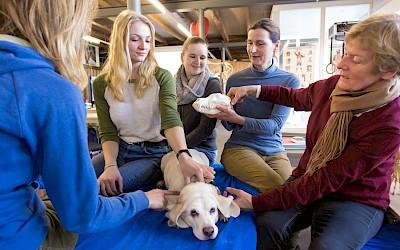 An einem Modell und am Hund wird den Teilnehmerinnen etwas erklärt