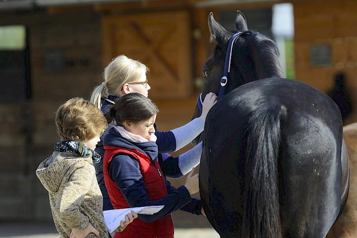 Drei Teilnehmerinnen üben an einem Pferd