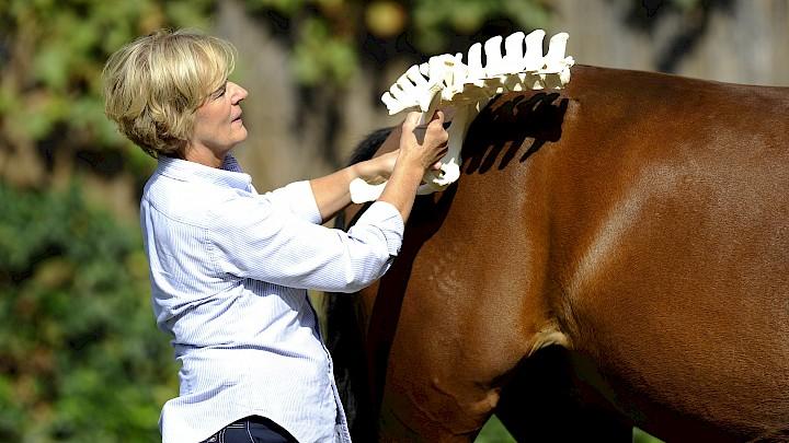 Eine Dozentin hält zur Veranschaulichung ein Skelettteil vor das Pferd