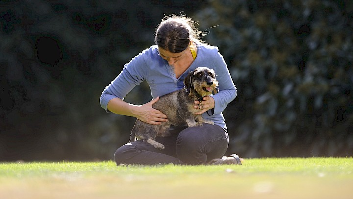 Eine Hundetherapeutin behandelt einen Dackel