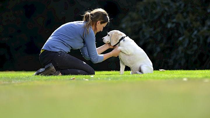 Eine Hundetherapeutin behandelt einen Hund an der Vorderpfote