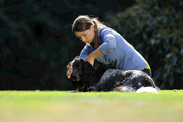 Eine Hundetherapeutin behandelt einen Hund an der Halswirbelsäule