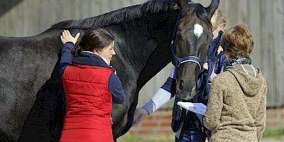Drei Teilnehmerinnen arbeiten im Praxisunterricht an einem Pferd