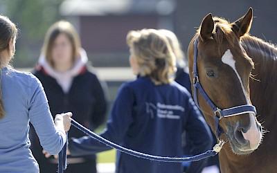 Teilnehmerinnen und Dozentin am Pferd im praktischen Unterricht