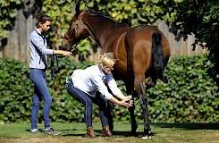 Die osteopathische Behandlung am Pferd wird von einer Dozentin vorgeführt