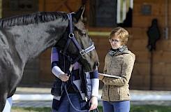 Teilnehmerinnen beraten am Pferd mit ihren Schulungsunterlagen