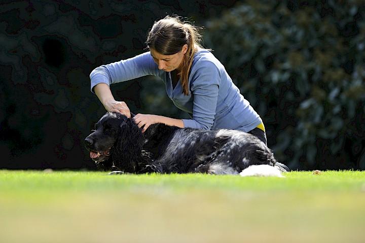 Eine Hundeosteopathin behandelt einen Hund an der Halswirbelsäule