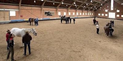 Kursteilnehmer arbeiten in Kleingruppen am Pferd in der Reithalle