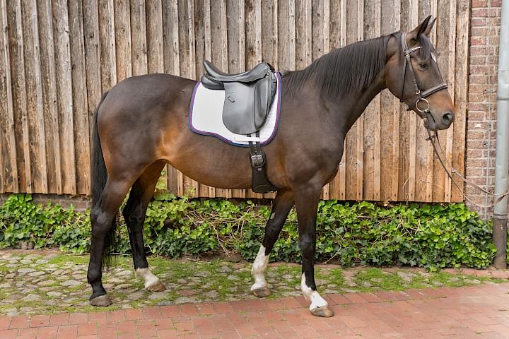 Ein perfekt gesatteltes Pferd