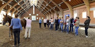 Die Teilnehmer schauen sich eine Behandlungsdemonstration am Pferd an
