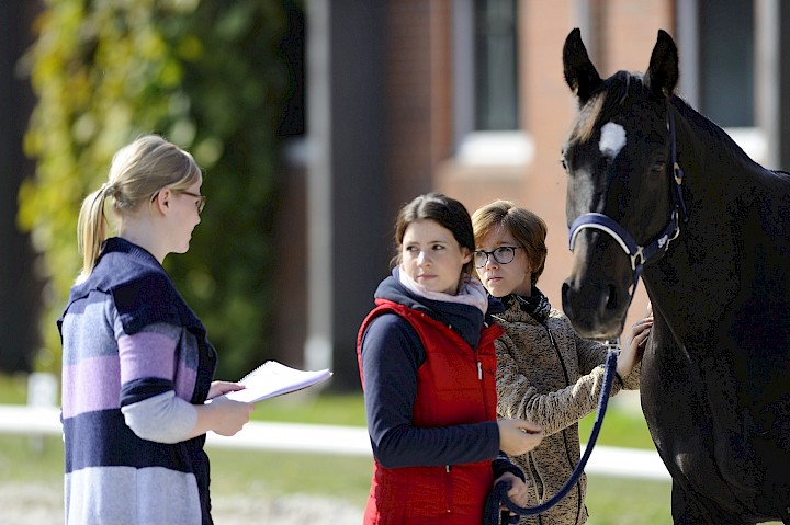 Gruppenarbeit am Pferd