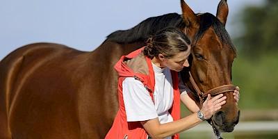 Eine Therapeutin steht am Pferdekopf