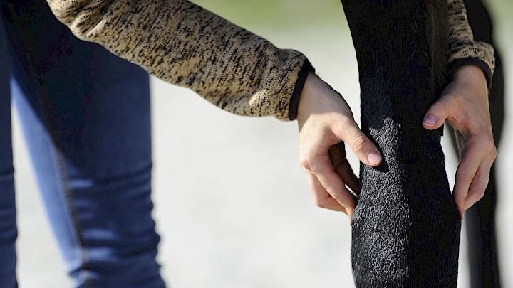 Eine Pferdephysiotherapeutin tastet das Bein des Pferdes ab