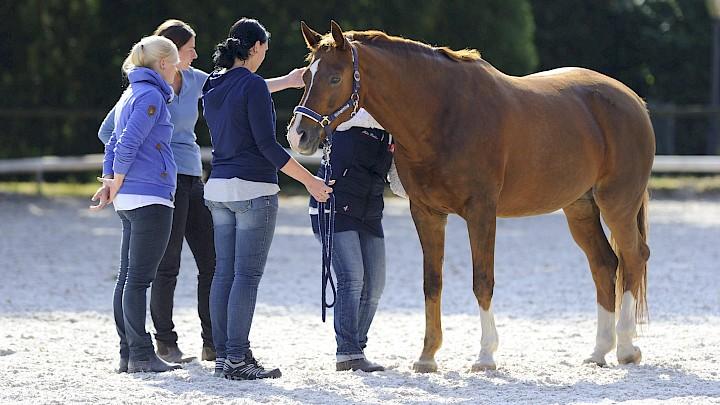Die Kursteilnehmerinnen üben die Stresspunktmassage mit Hilfe der Dozentin am Pferd