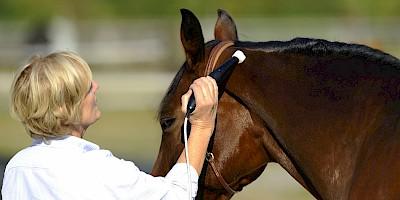 Ein Pferd wird im Kopfbereich mit der Matrixtherapie behandelt