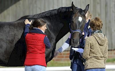 Drei Teilnehmerinnen arbeiten am Pferd