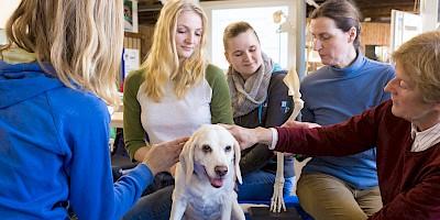 Praxisunterricht in Kleingruppen am Hund