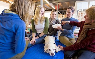 Die Dozentinnen erklären den Teilnehmerinnen etwas am Modell des Hundekopfes