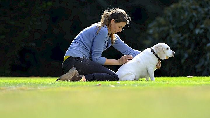 Eine Hundephysiotherapeutin behandelt einen Hund am Rücken