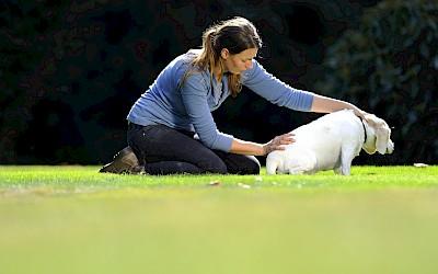 Die Therapeutin behandelt einen Hund am unteren Rücken